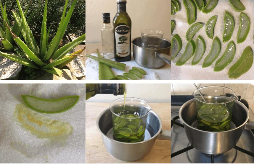 Aloe-Vera-Öl (Mazerat) selbermachen