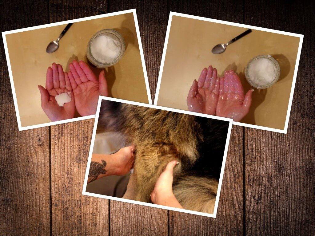 Kokosöl und ätherische Öle gegen Zecken für Hunde