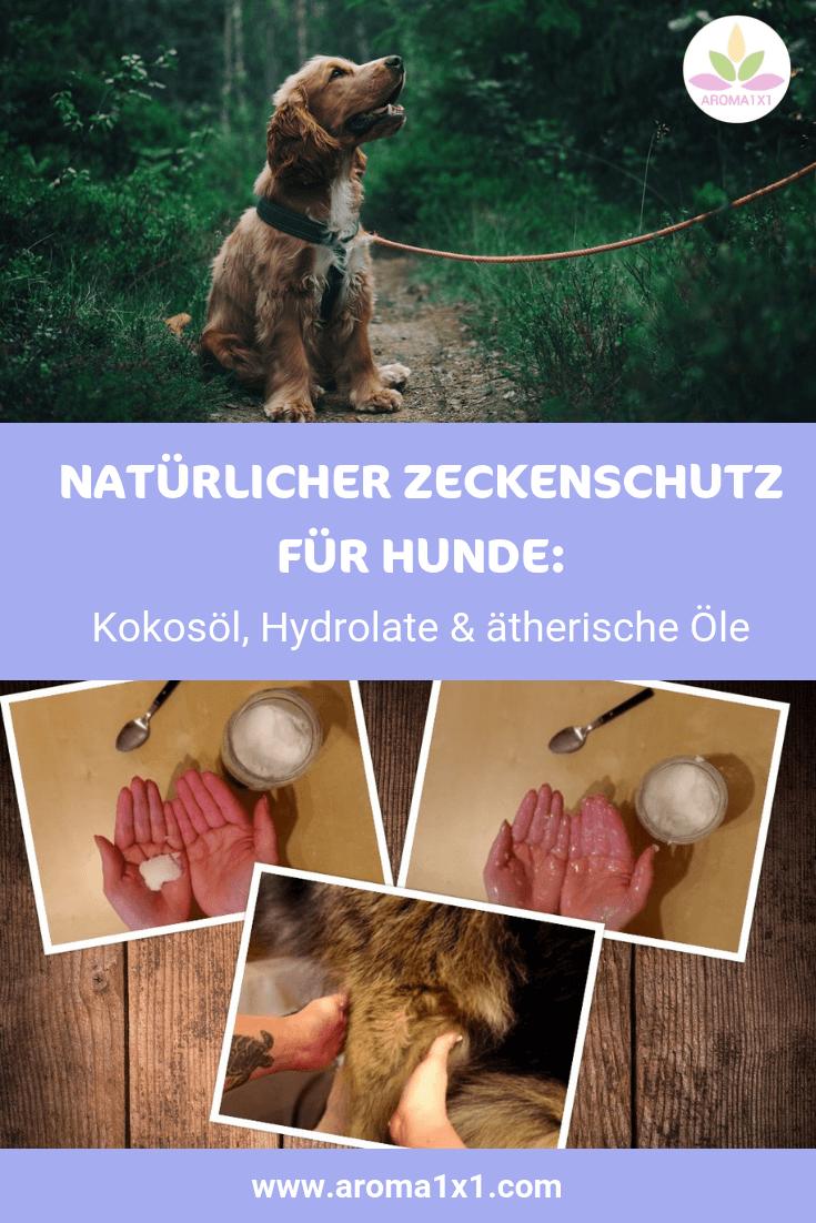 Kokosöl gegen Zecken für Hunde