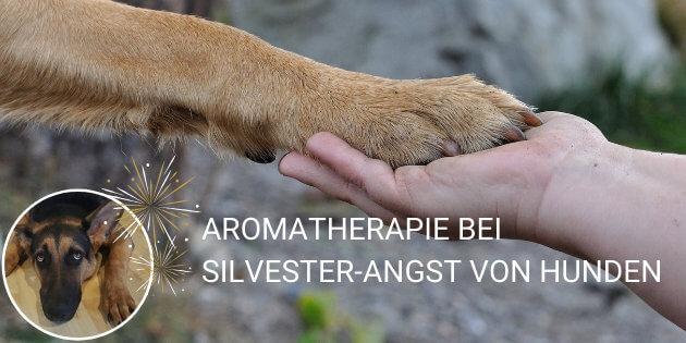 ätherische Öle als natürliches Beruhigungsmittel Silvester Angst Hund