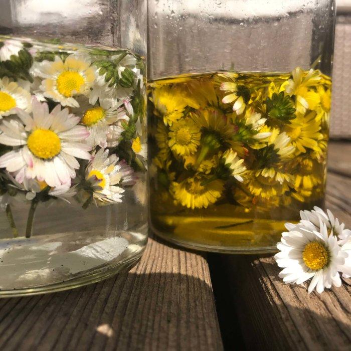 Gänseblümchenöl und Gänseblümchentinktur für Gänseblümchencreme selbermachen
