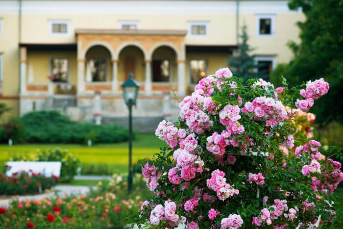 Aromareisen Rosengärten Rosarium Baden bei Wien